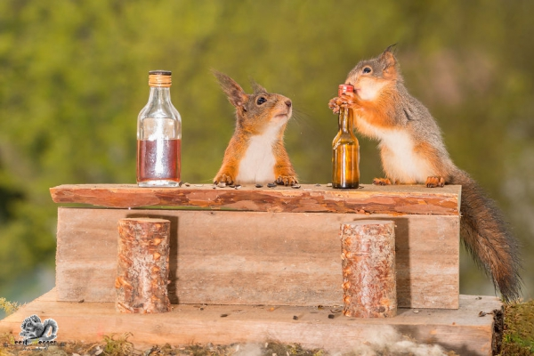 closeup on squirrels enjoying their playground 15 pictures 8