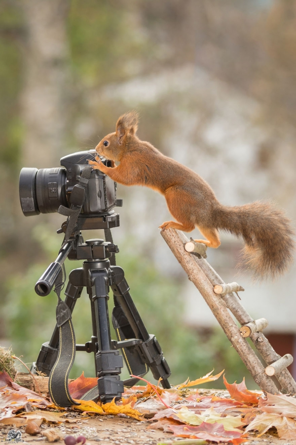 closeup on squirrels enjoying their playground 15 pictures 9