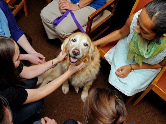 college therapy dogs help students destress during finals 8 pictures 1