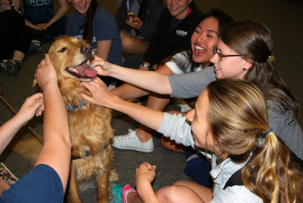 college therapy dogs help students destress during finals 8 pictures 4
