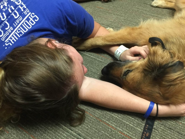 college therapy dogs help students destress during finals 8 pictures 8