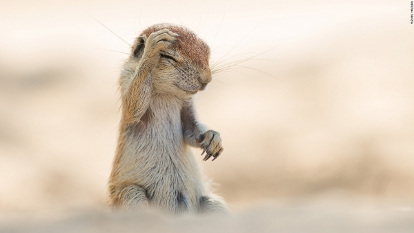 comedy wildlife photography awards winners and their amazing travel stories 10 pictures 10