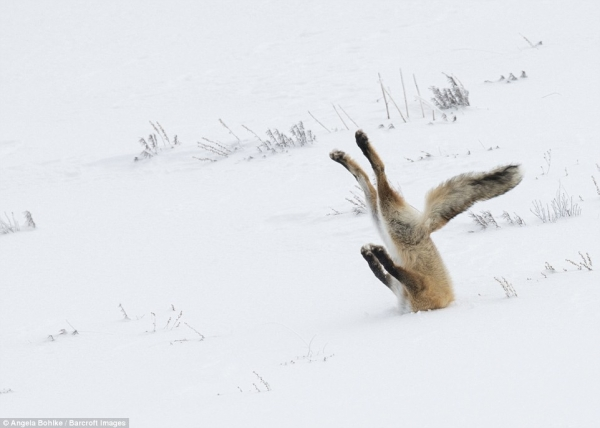 comedy wildlife photography awards winners and their amazing travel stories 10 pictures 2