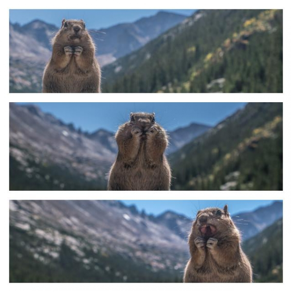 comedy wildlife photography awards winners and their amazing travel stories 10 pictures 3