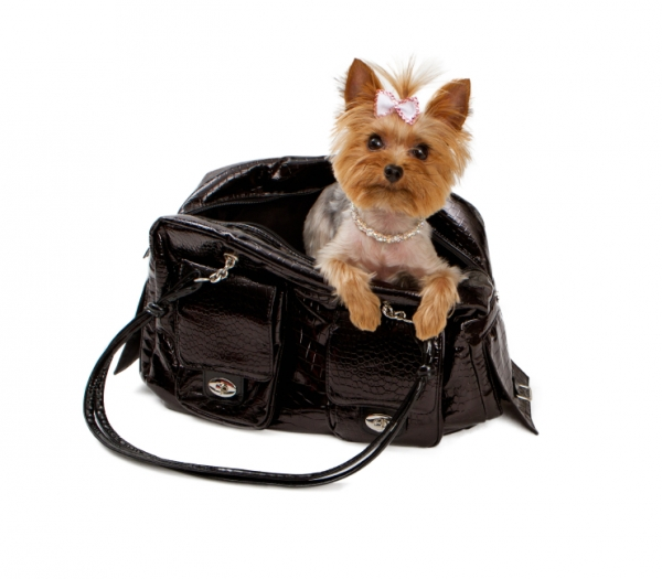 common misconceptions and myths about small dog breeds 10 pictures 6