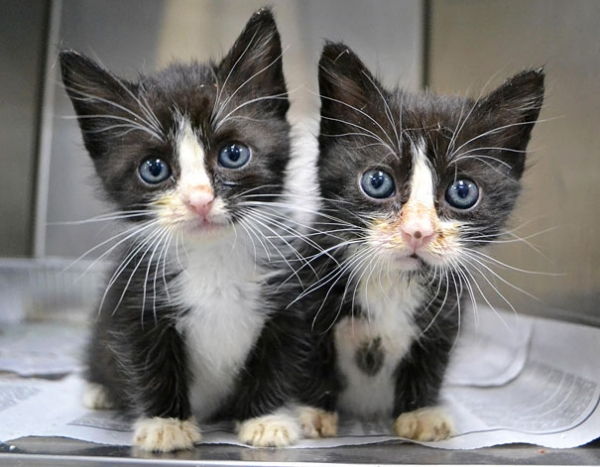copypaste rightly done 16 gorgeous animal twins 4