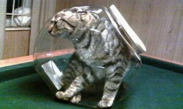 curiosity killed the cat 19 funny animals hopelessly stuck 4