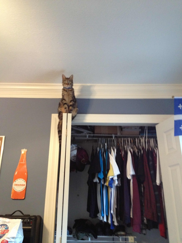 curious cats always see everything 15 pictures 14