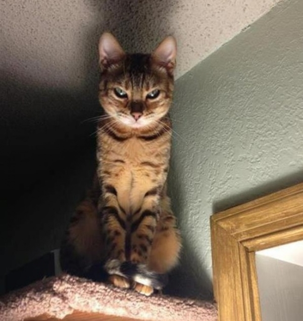 curious cats always see everything 15 pictures 15