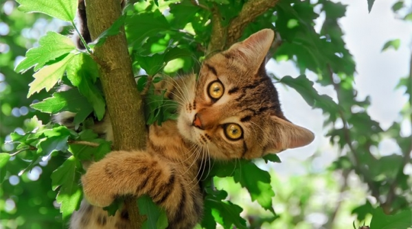 curious cats always see everything 15 pictures 4