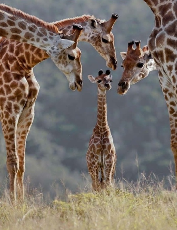 cute baby animals surrounded by love 18 most adorable animal families 10