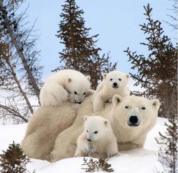 cute baby animals surrounded by love 18 most adorable animal families 11