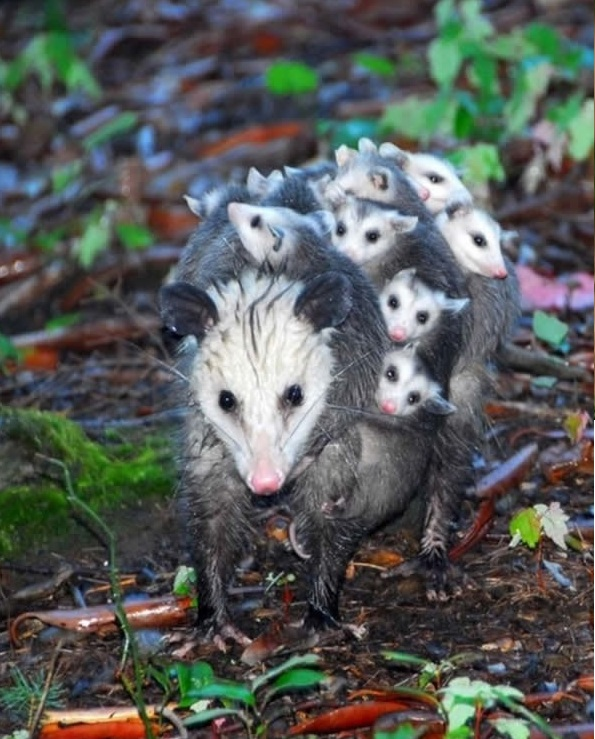 cute baby animals surrounded by love 18 most adorable animal families 13