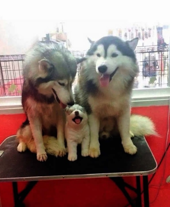 cute baby animals surrounded by love 18 most adorable animal families 15