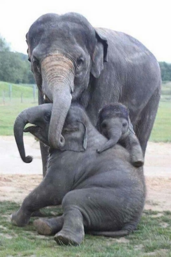 cute baby animals surrounded by love 18 most adorable animal families 16