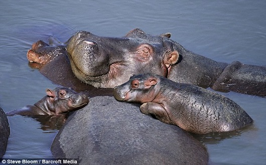 cute baby animals surrounded by love 18 most adorable animal families 18