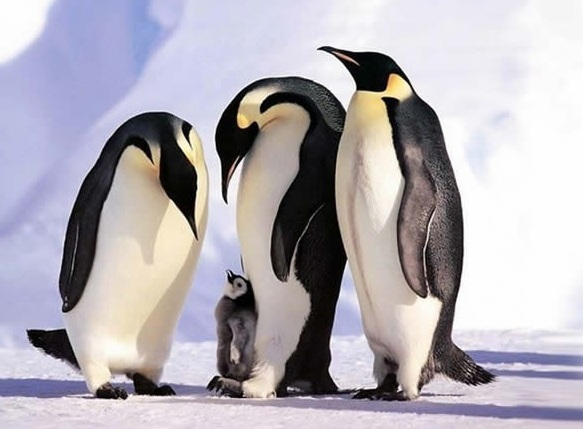 cute baby animals surrounded by love 18 most adorable animal families 6
