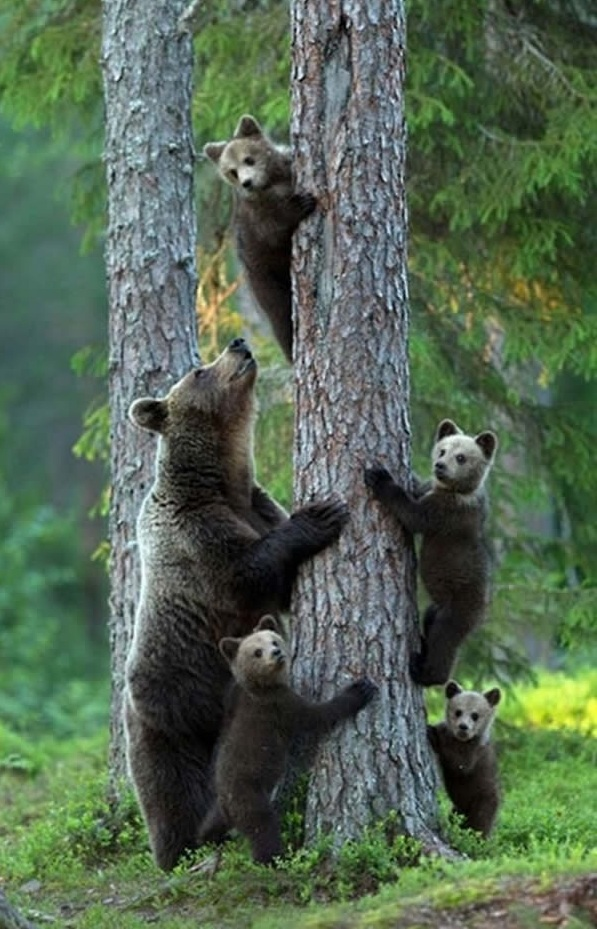 cute baby animals surrounded by love 18 most adorable animal families 7