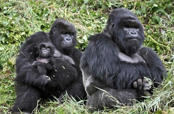 cute baby animals surrounded by love 18 most adorable animal families 9