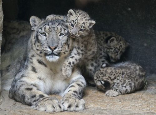 cute dangerous and interesting animals of asia  15 pictures 1
