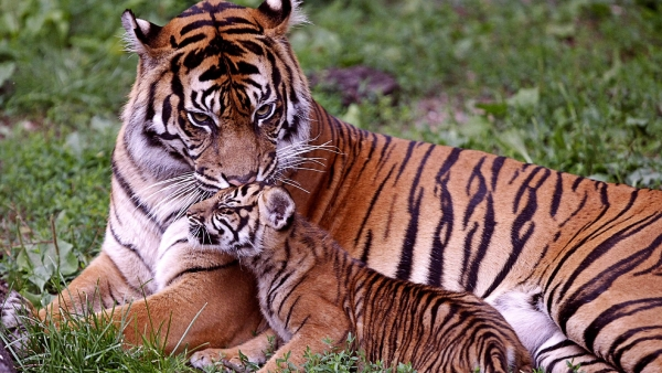 cute dangerous and interesting animals of asia  15 pictures 3