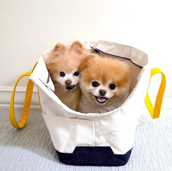 cute dog bandits that will melt your heart 12 pictures 3