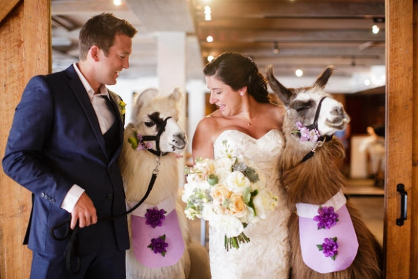 cute trend animals at weddings 10 pictures 2