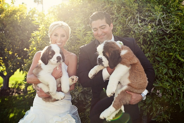 cute trend animals at weddings 10 pictures 3
