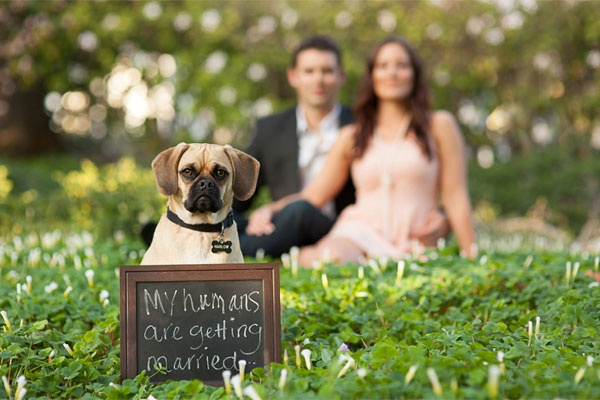 cute trend animals at weddings 10 pictures 6