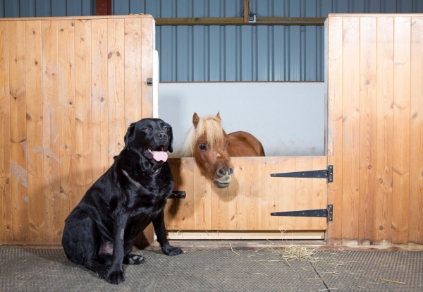 cutest and tiniest horse is a part of the family 10 pics 1 video 1