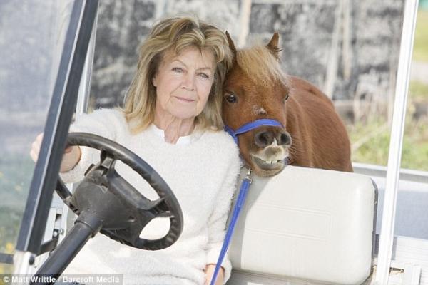 cutest and tiniest horse is a part of the family 10 pics 1 video 10