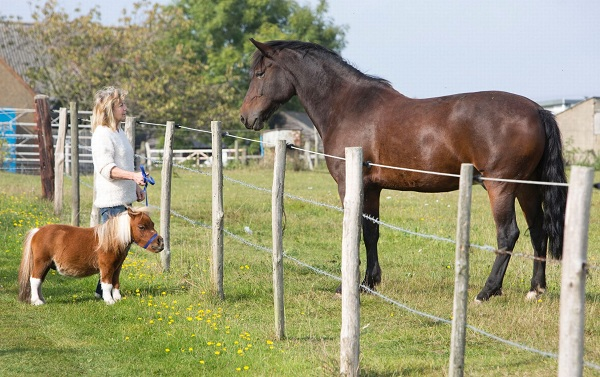 cutest and tiniest horse is a part of the family 10 pics 1 video 3