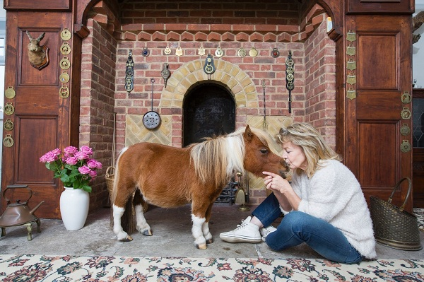 cutest and tiniest horse is a part of the family 10 pics 1 video 8