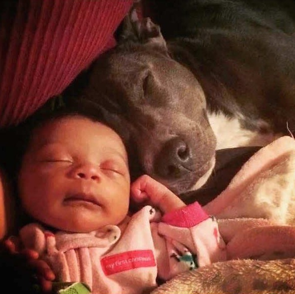 danger for the baby or most faithful companion 13 pictures 10