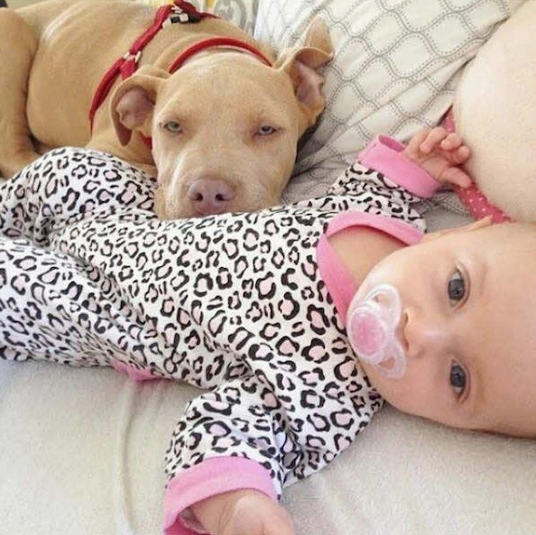 danger for the baby or most faithful companion 13 pictures 11