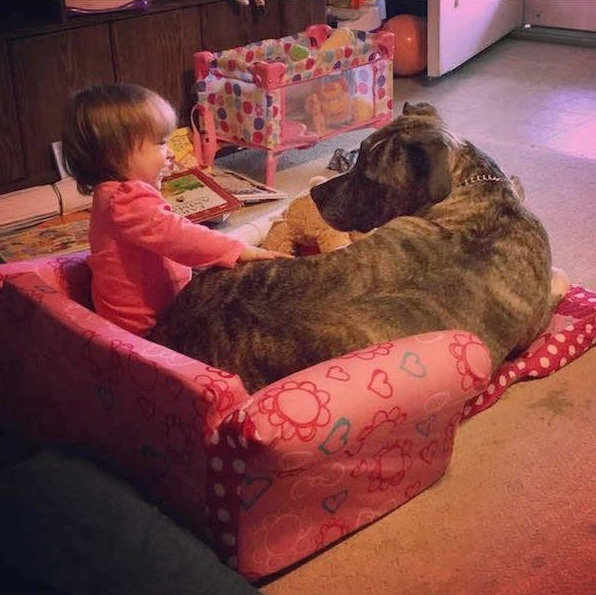 danger for the baby or most faithful companion 13 pictures 12