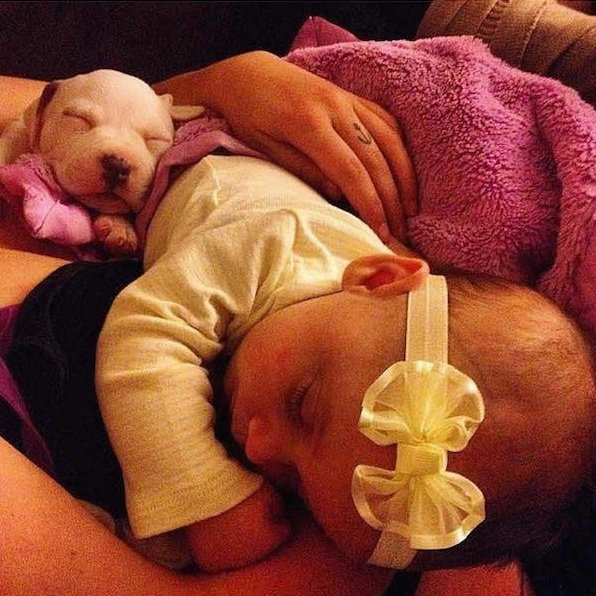 danger for the baby or most faithful companion 13 pictures 13