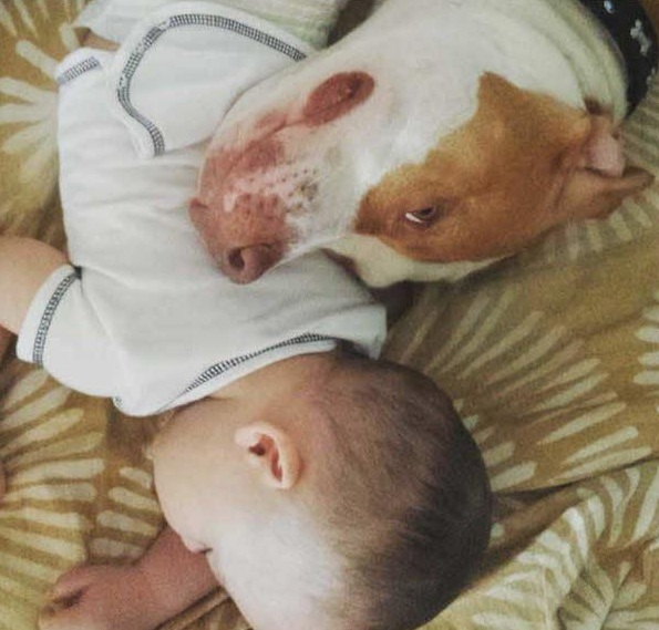 danger for the baby or most faithful companion 13 pictures 2