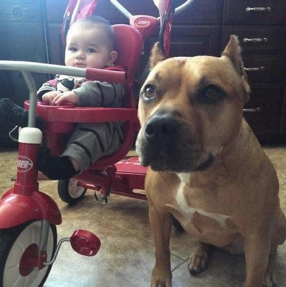 danger for the baby or most faithful companion 13 pictures 4