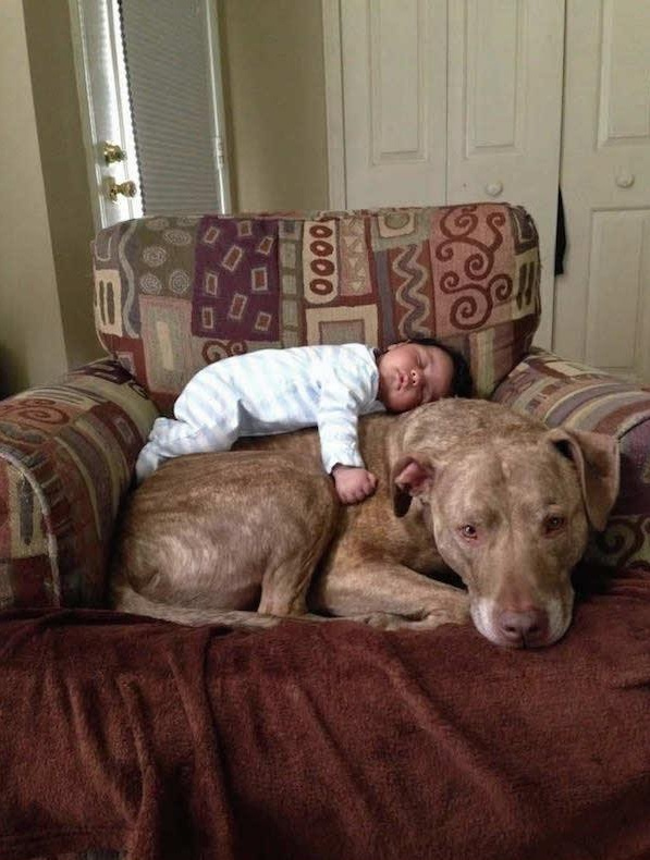 danger for the baby or most faithful companion 13 pictures 8