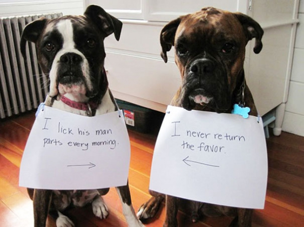 dog shaming 17 adorable partners in crime 1