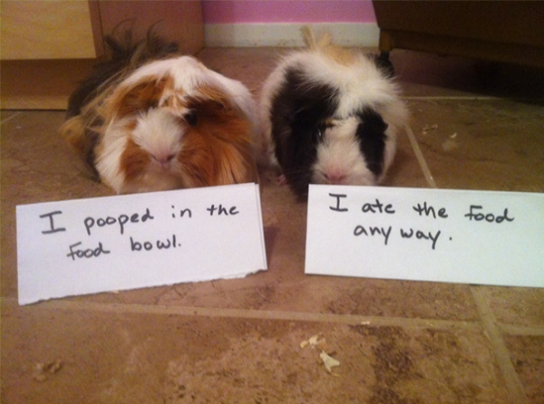 dog shaming 17 adorable partners in crime 10