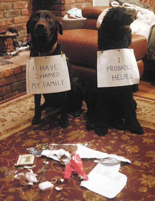 dog shaming 17 adorable partners in crime 11