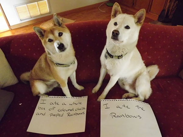 dog shaming 17 adorable partners in crime 13