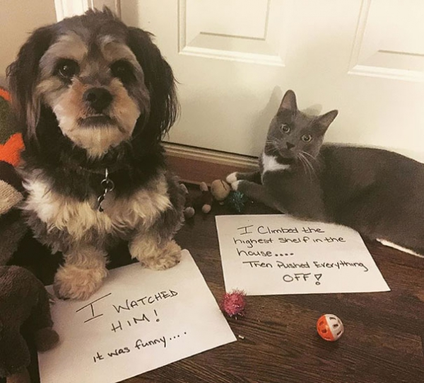dog shaming 17 adorable partners in crime 14