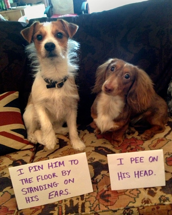 dog shaming 17 adorable partners in crime 15