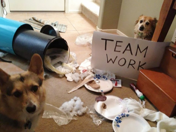 dog shaming 17 adorable partners in crime 16