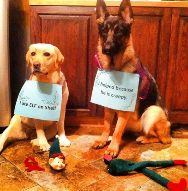 dog shaming 17 adorable partners in crime 17