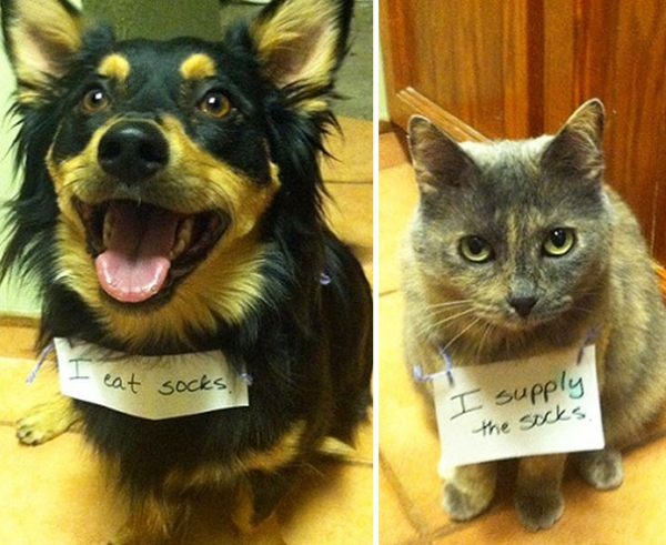 dog shaming 17 adorable partners in crime 2