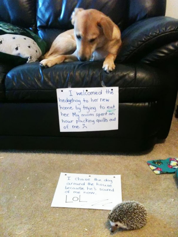 dog shaming 17 adorable partners in crime 3